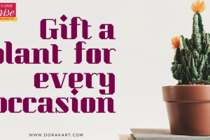 Surprise A Friend with GIFT PLANT